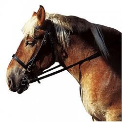 Hoofdstel voor trekpaard